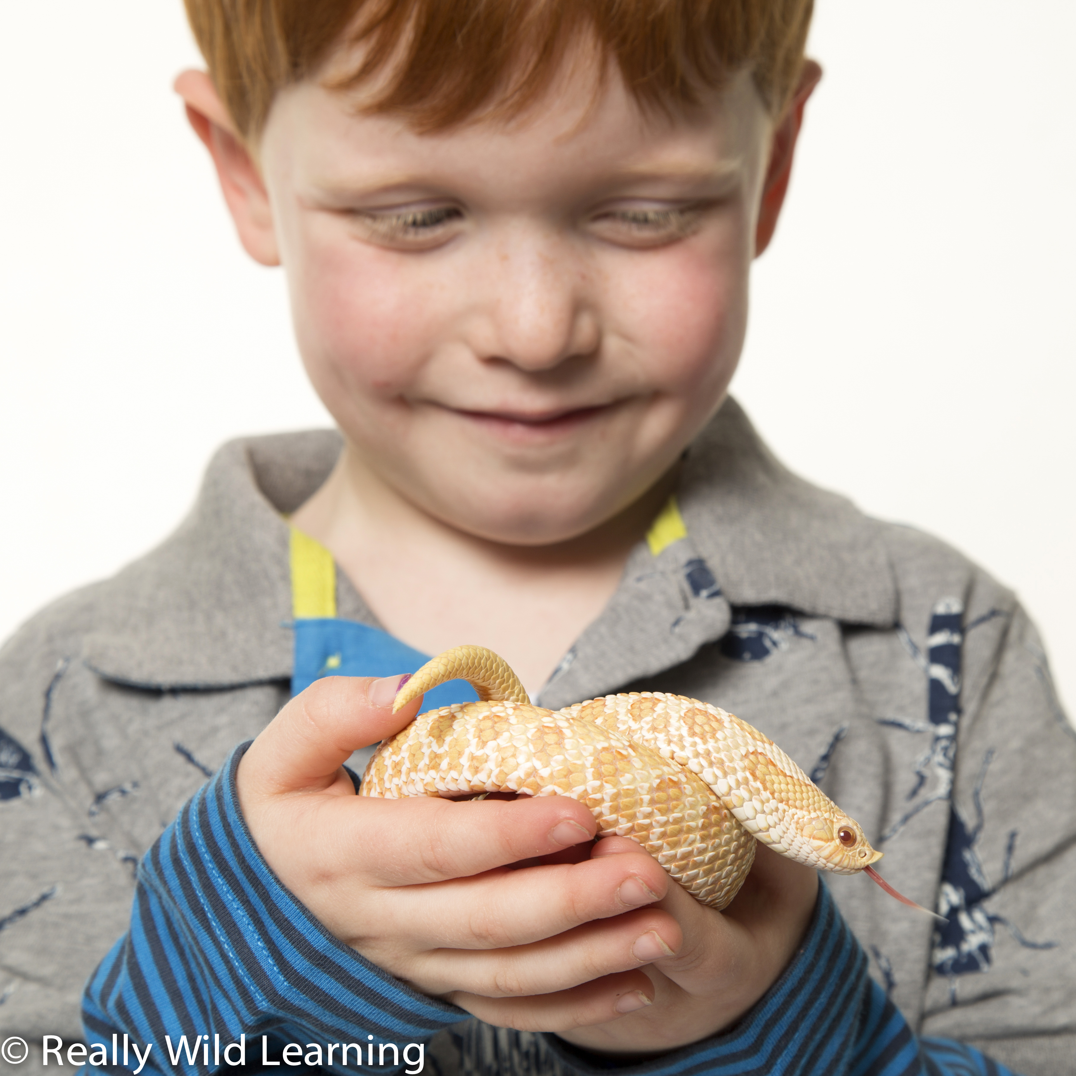 Educational Animal Event introducing you to some of nature's mischief makers - interactive presentation, amazing animal facts and the opportunity to meet the animals. Booking Essential. Limited Places